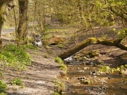 Haigh Woodland Park in Wigan